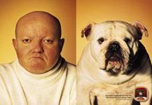 Dogs look alike